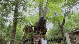 日本屈指のパワースポット「來宮神社」で恋愛成就!?静岡・星野リゾート周辺のおすすめ観光地