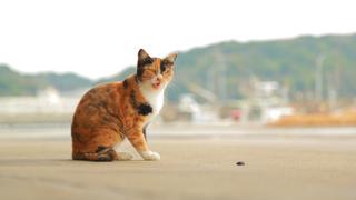 行きたい人が急増中!福岡にある猫の島「相島」でのんびり猫探し