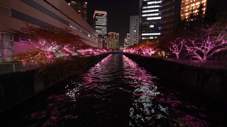 今年も桜が咲き光る!「目黒川みんなのイルミネーション2017」でロマンティックな冬のお花見