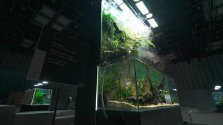 4日間限定。幻想的なアクアリウムを楽しむ「生茶会 水の森の茶室」