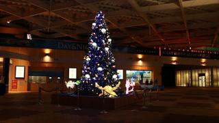 ナイトワンダーアクアリウム2016~月光に漂う水族館~ 新江ノ島水族館のクリスマス♡