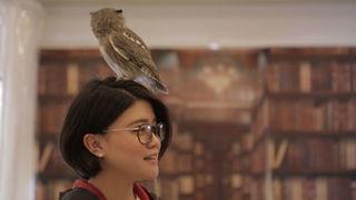 大阪・天満「フクロウのみせ」で本物のフクロウと触れ合い体験