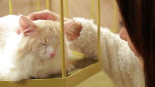 ニャンとも癒される!東京から福岡まで厳選した「おすすめ猫カフェ」6選