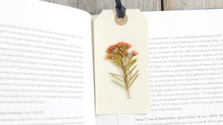簡単ハンドメイドでお花をもっと楽しむ。電子レンジを使った「押し花」の作り方