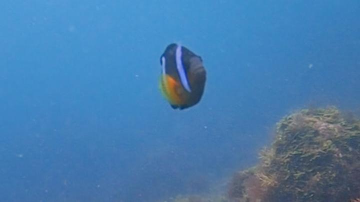 ルトロンから初島シーフロントのダイビングご予約の方に「海中写真」を1枚プレゼント
