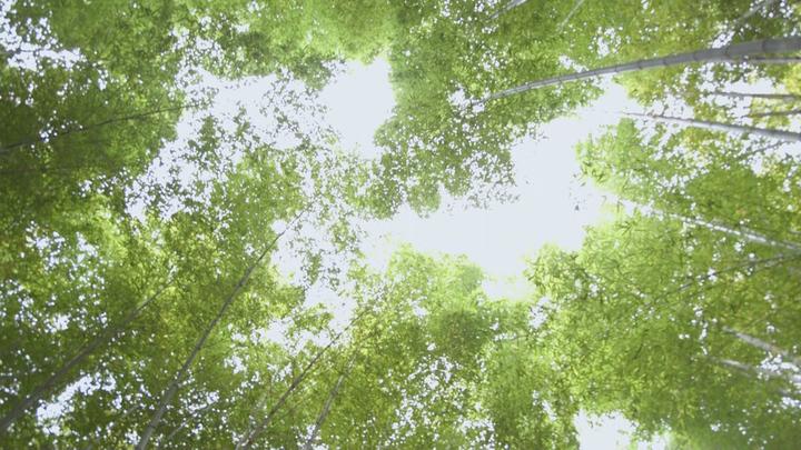 「嵐山」の竹林