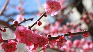 一足先に、会いに行く。都内近郊で春を感じるイベント6選