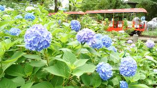 梅雨の憂鬱を晴らす。心癒される動植物イベント6選