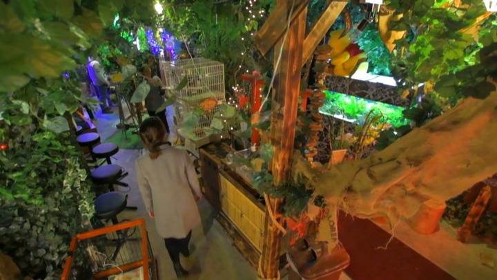 浅草にある不思議なジャングル! フクロウに癒される森のカフェ「アウルの森」の2番目の画像