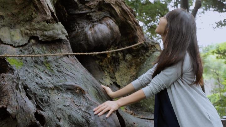 来宮神社の大楠の幹