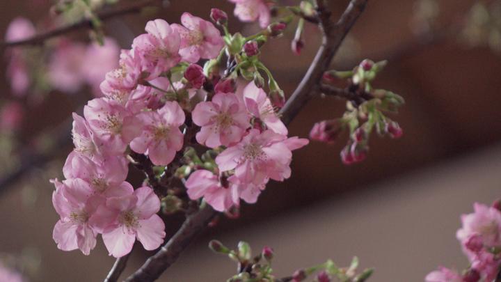 在櫻花的環繞下品味世界饕客喜愛的好味道「DINING OUT SPECIAL SHOWCASE」の2番目の画像