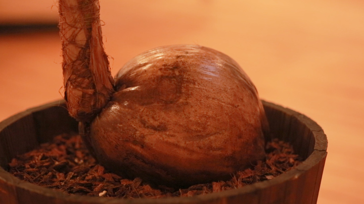 ココナッツ専門店の低糖質フード! 「ココウェルカフェ」でカラダの中から美しくの1番目の画像