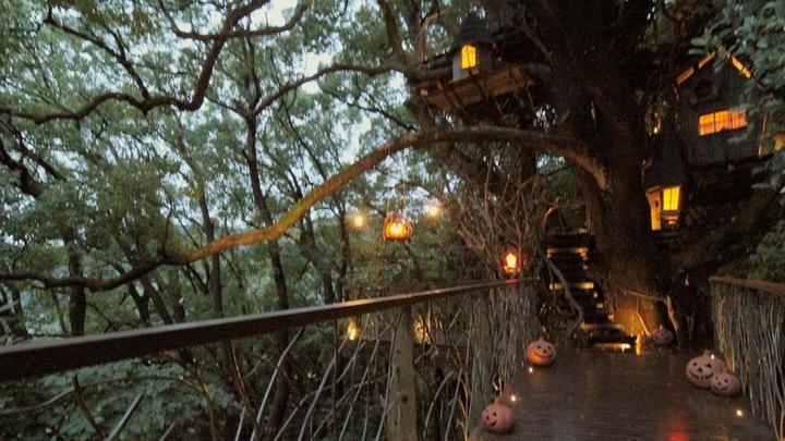 宛如秘密基地!「星野渡假村 RISONARE熱海」樹齡約300年的樹屋の3番目の画像