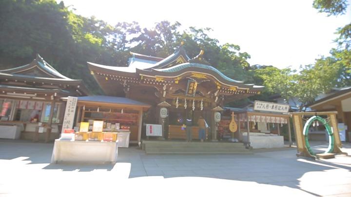 江島神社の「むすびの樹」
