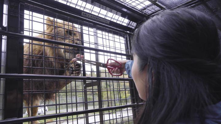 「富士サファリパーク」のジャングルバスツアーでライオンに餌やり