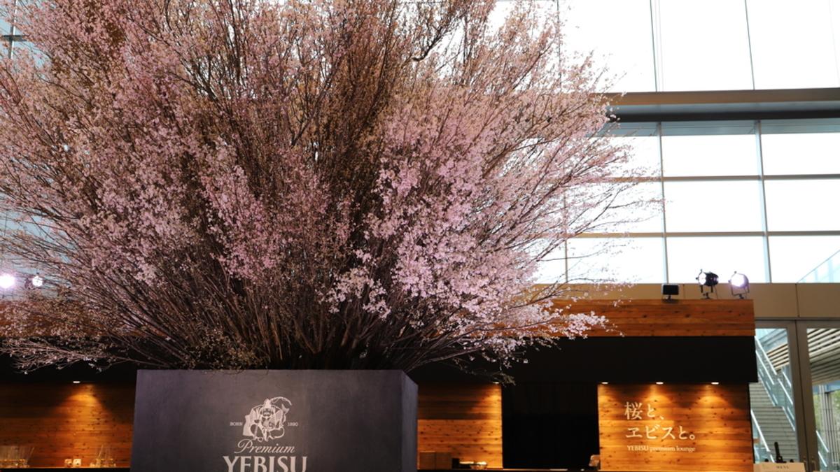 桜と、ヱビスと。YEBISU premium lounge