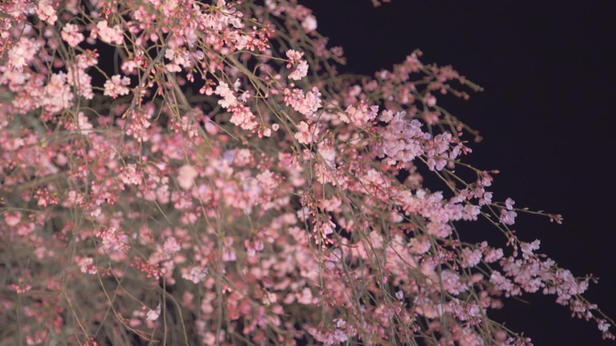 六義園しだれ桜と大名庭園のライトアップ