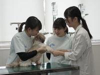 国際動物看護専門学校
