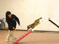 ドッグトレーナー科 アジリティSP体験in岡崎校の画像