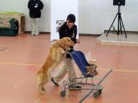 ドッグトレーナー科SP 特殊犬訓練体験in岡崎校の画像