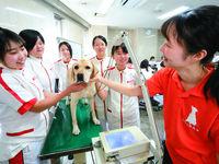 専門学校日本動物21フォトギャラリー4
