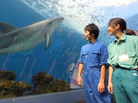 日本ペット&アニマル専門学校{水族館・ドルフィントレーナー科のイメージ