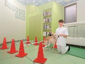 国際動物専門学校動物看護・理学療法学科のイメージ