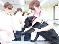 Bタイプ 学科別体験 <愛玩動物看護学科、美容・デザイン学科  本館開催>の画像