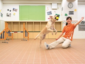 国際動物専門学校しつけ・トレーニング学科のイメージ
