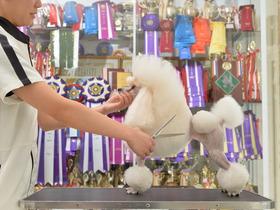 いばらき動物専門学院愛犬美容学科 修士科のイメージ