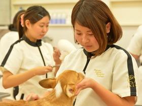 いばらき動物専門学院愛犬美容学科 専修科のイメージ
