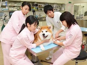 専門学校 東北動物看護学院動物看護総合学科のイメージ