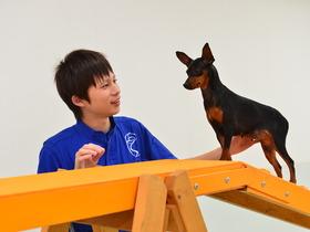 いばらき動物専門学院家庭犬訓練学科 専修科のイメージ
