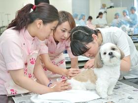 ヤマザキ動物専門学校{動物看護・美容・トレーニング学科のイメージ