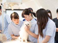 ★動物看護師のお仕事体験★学内犬と一緒に楽しく学ぼう♪の画像