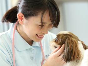 高崎動物専門学校ペットビジネス学科 動物看護コースのイメージ