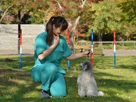 いばらき動物専門学院家庭犬訓練学科のイメージ