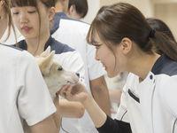 北海道どうぶつ・医療専門学校からのニュース画像[3265]