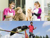 【犬や猫・サーバルキャットやカピバラ…】動物たちと一緒に行うオープンキャンパス!の画像