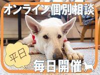 【WEB開催】オンライン個別相談の画像