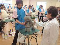 九州サンシャイングルーミングスクール(熊本校)
