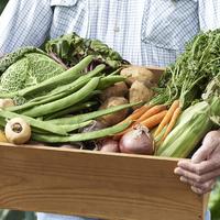 【初心者におすすめ!】家庭菜園の人気ランキング10選