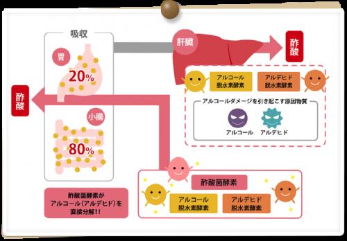出典:キユーピーと酢酸菌 http://www.kewpie.co.jp/sakusankin/