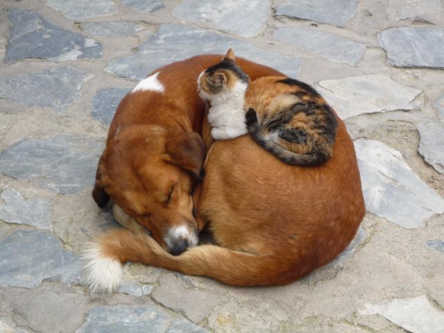 猫の飼育数が犬を上回る 調査開始から初 全国犬猫飼育実態調査
