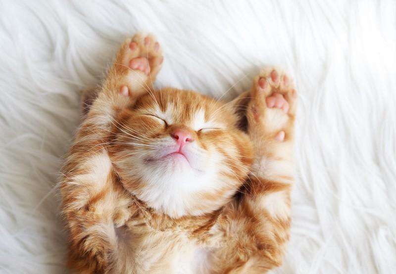 仰向けで伸びをしている猫