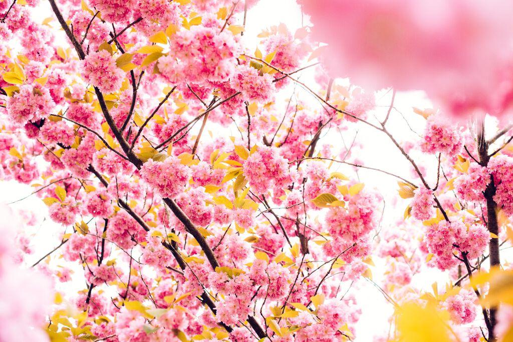 お花見にオススメ♪写真に映えるメイクで誰よりも可愛く♡の画像