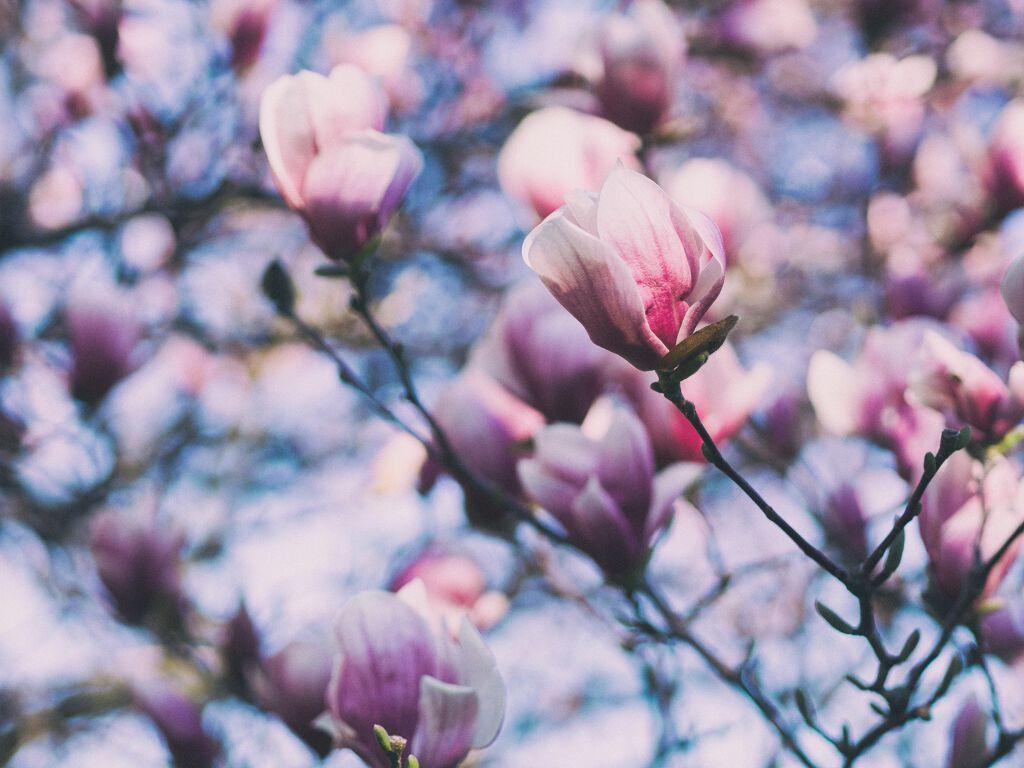 【LIPS春のおすすめコスメ第1弾】社会人におすすめ春コスメ✨の画像