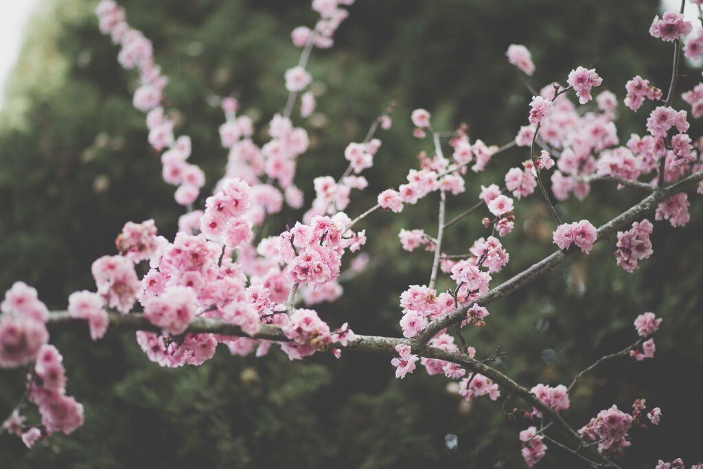 【LIPS春のおすすめコスメ第3弾】高校生におすすめ春コスメ✨の画像