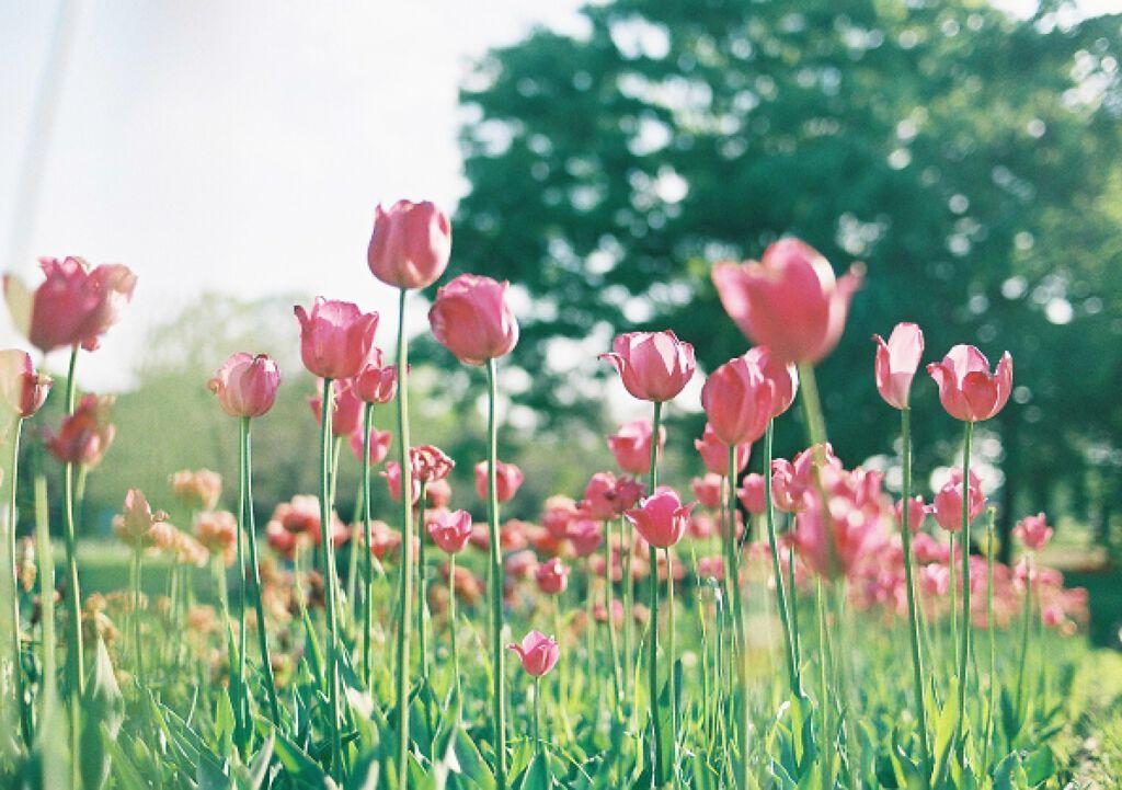春は指先からやってくる。ゆるふわお花ネイルで季節を先取り♡の画像