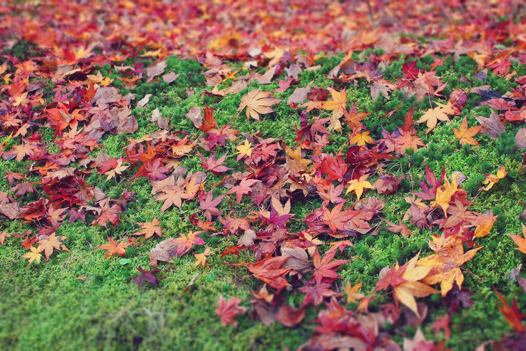 秋に使いたい♡こなれ感をGETできるブラウンリップを大特集!の画像